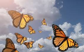 Geen Redlight district maar Butterflydistrict